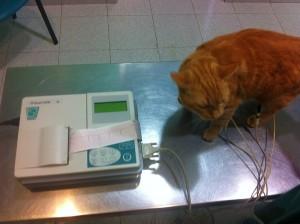 Aparelho de Electrocardiograma